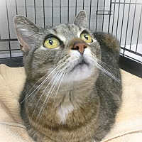 Adopt A Pet :: Pixie - Webster, MA