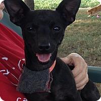 Adopt A Pet :: Buster - Newell, IA