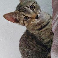 Adopt A Pet :: Astrid - Chelsea - Kalamazoo, MI