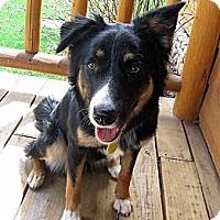 Adopt A Pet :: Kelsie - Glenrock, WY