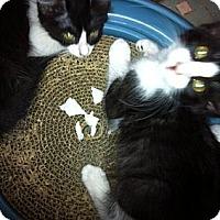 Adopt A Pet :: Pansy - Jacksonville, FL
