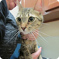 Adopt A Pet :: Finnegan - Gilbert, AZ