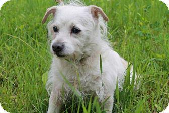 Terrier (Unknown Type, Medium) Mix Dog for adoption in Navan, Ontario - Zeke