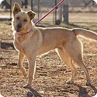 Adopt A Pet :: Sandy - Post, TX