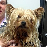 Adopt A Pet :: Lillian - Greencastle, NC