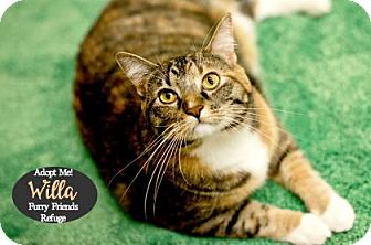 Domestic Shorthair Cat for adoption in West Des Moines, Iowa - Willa