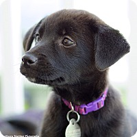 Adopt A Pet :: McKinlay - Marietta, GA