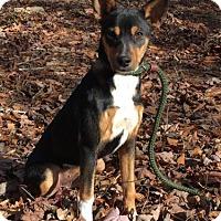 Adopt A Pet :: Noori - Brattleboro, VT