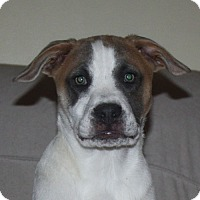 Adopt A Pet :: Carson - PENDING, in Maine - kennebunkport, ME