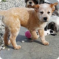 Adopt A Pet :: BRUNO - Winnetka, CA