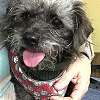 Adopt A Pet :: IRIE - Los Angeles, CA