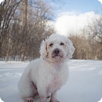 Adopt A Pet :: Fiona - Drumbo, ON