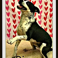 Adopt A Pet :: Pip - Raleigh, NC
