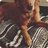 Adopt A Pet :: Milo - Alpharetta, GA