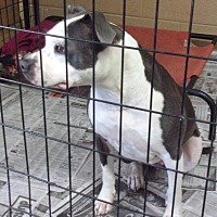 Adopt A Pet :: Oreo - Jamestown, TN