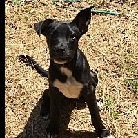 Adopt A Pet :: Nat - Pensacola, FL