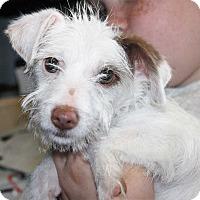 Adopt A Pet :: Orabella - Fort Madison, IA