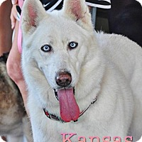 Adopt A Pet :: Kansas--Foster Needed!! - Carrollton, TX