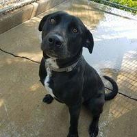 Adopt A Pet :: Lenny - Aberdeen, SD