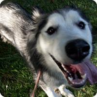 Adopt A Pet :: Robin - Augusta County, VA