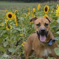 Adopt A Pet :: Morgan - Media, PA