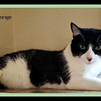 Adopt A Pet :: George - Tombstone, AZ