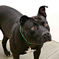 Adopt A Pet :: HERVEY - Phoenix, AZ