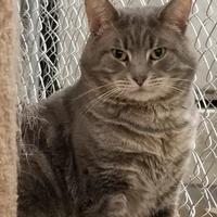 Adopt A Pet :: Hampton - Twinsburg, OH