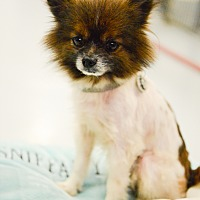 Adopt A Pet :: Romeo - Muldrow, OK