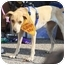 Photo 1 - Whippet/Hound (Unknown Type) Mix Dog for adoption in Shelbyville, Kentucky - Precious
