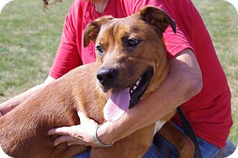 Shepherd (Unknown Type) Mix Dog for adoption in Elyria, Ohio - Galaxy