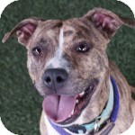 Terrier (Unknown Type, Medium) Mix Dog for adoption in Eatontown, New Jersey - Shannon