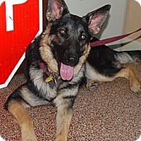 Adopt A Pet :: Sissy - Fort Worth, TX