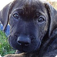 Adopt A Pet :: Lacie-ADORABLE! - Hadley, MI
