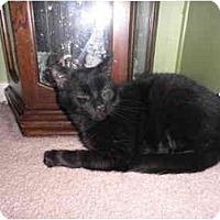 Adopt A Pet :: Griffin - Warren, MI