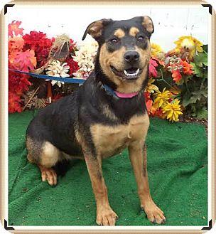 Shepherd (Unknown Type) Mix Dog for adoption in Marietta, Georgia - RASHA