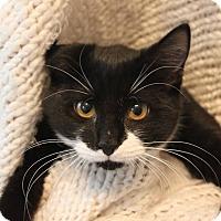 Adopt A Pet :: Amayra - Fredericksburg, VA