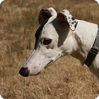 Adopt A Pet :: Devan - Portland, OR