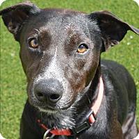 Adopt A Pet :: Benji - Meridian, ID