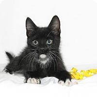 Adopt A Pet :: Ranger - Lufkin, TX