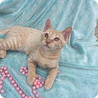 Adopt A Pet :: Fluff and Stuff - Tampa, FL
