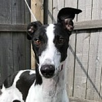 Adopt A Pet :: XK SHES A KEEPER - Grandville, MI