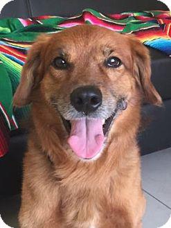 Labrador Retriever Mix Dog for adoption in Philadelphia, Pennsylvania - Martin