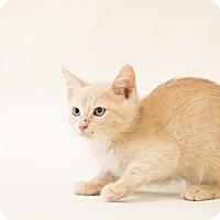 Adopt A Pet :: SECRET - Houston, TX