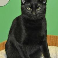 Adopt A Pet :: Lacey - Suwanee, GA