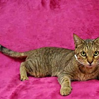 Adopt A Pet :: FOREST - Naples, FL