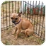 Photo 3 - Chihuahua Mix Dog for adoption in Austin, Texas - Parker