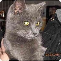 Adopt A Pet :: Pewter - Riverside, RI