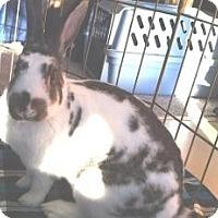 Adopt A Pet :: Beatrix - Maple Shade, NJ