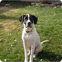 Adopt A Pet :: Chuckie-ADOPTION PENDING! - Columbus, OH